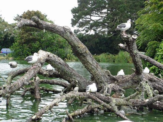 Seagulls take a rest on Stow Lake.