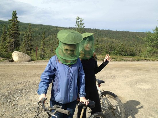 Denali Backcountry Lodge: Mountain bikes were available, but we couldn't outrun the 'skeeters.