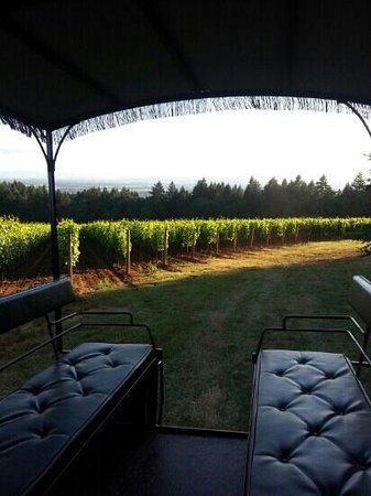 Equestrian Wine Tours: View from the 12-passenger carriage