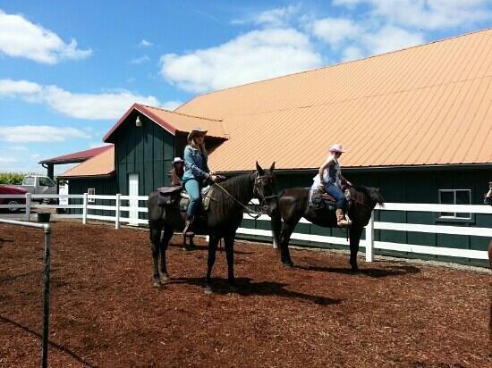 Equestrian Wine Tours: Bachelorette party on horseback!