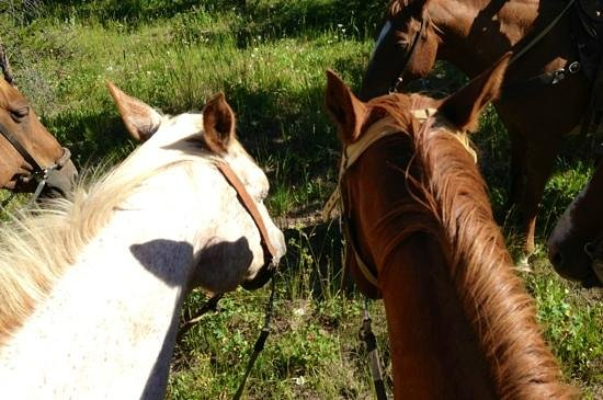Yellowstone Horses - Eagle Ridge Ranch: two of the cutest horses there!