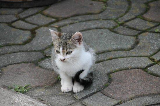 Restoran-Pansion Plitvicka Sedra: Nice kittens on the yard...