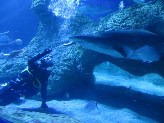 AQWA - The Aquarium of Western Australia: Shark Feeding