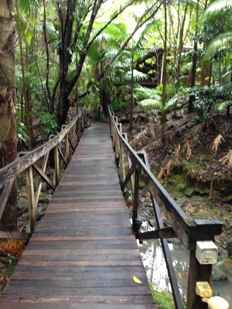 Amazing Wollumbin Palms Retreat at Mt Warning: bridge up to the lodge