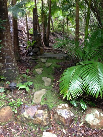 Amazing Wollumbin Palms Retreat at Mt Warning: romantic outdoor shower