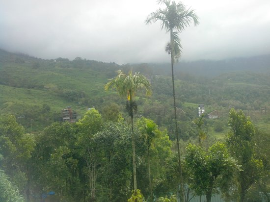 Nest Resort: The view from Nest Inn