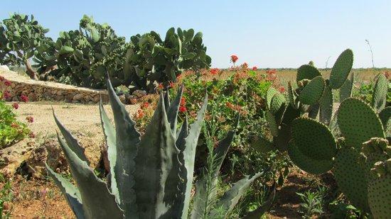 Agriturismo Casa Porcara: il giardino