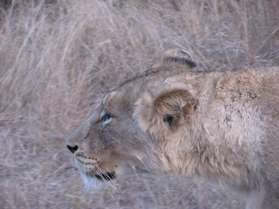 Tydon Safaris Day Tours: Looking for lunch