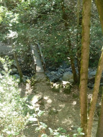 Uvas Canyon County Park: one of the bridges on the lower trail