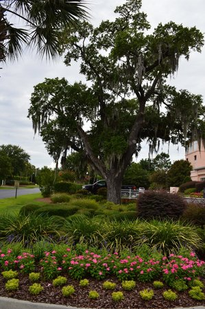 Residence Inn Charleston Downtown/Riverview: The grounds of the hotel were very nice.  Pretty flowers and trees.