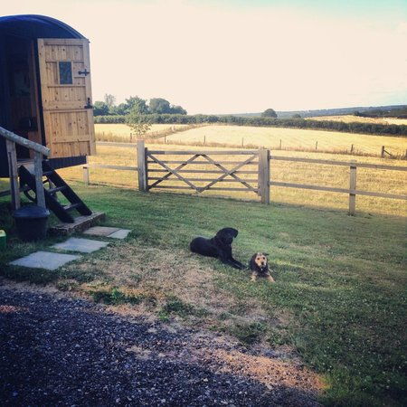 Heath Hall Farm: Relaxing with our canine hosts, Dotty and Mabel