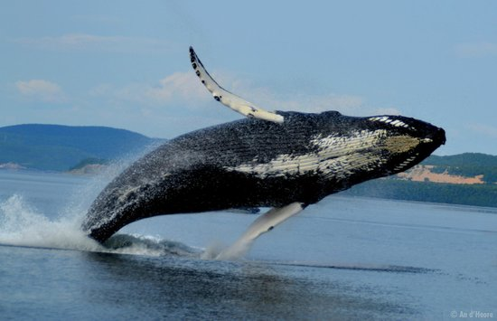 Croisieres AML : Meet the world's most fascinating and majestic creatures.