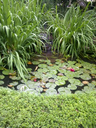 Victoria Gables Bed & Breakfast: Froggy pond