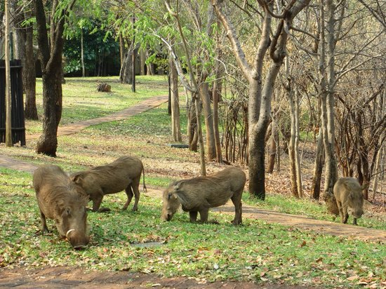 Victoria Falls Safari Club: Pumba