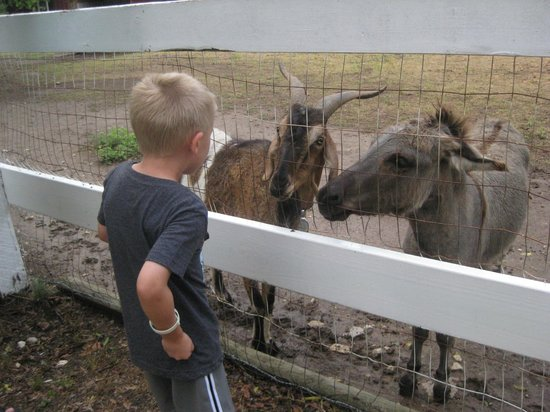 Country Woods Inn : Billy Goat and Donkey
