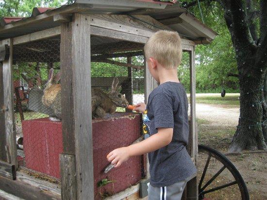 Country Woods Inn : Bunnies