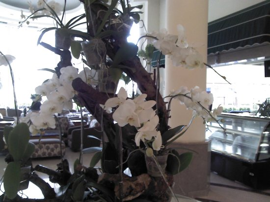Aryaduta Makassar: fresh orchid at hotel lobby