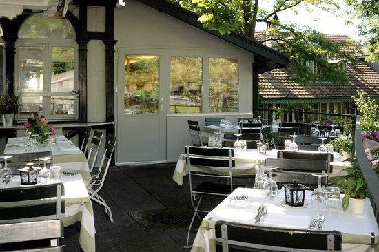 Brasserie Bärengraben: Die Terrasse unter dem Kastanienbaum