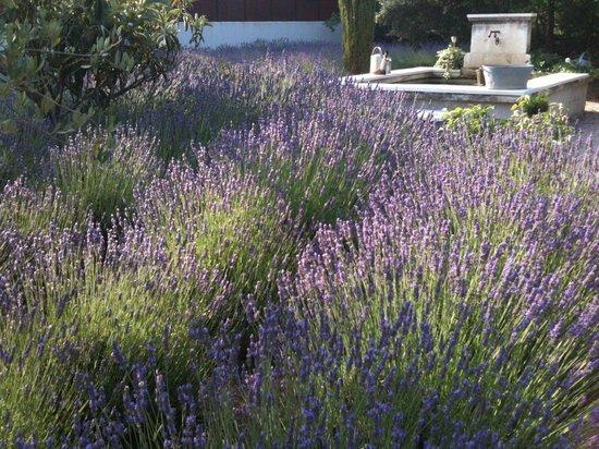 Le Clos des Lavandes : The garden