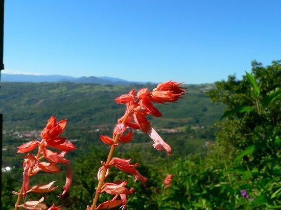 Hotel Wagelia Turrialba: El  mirador