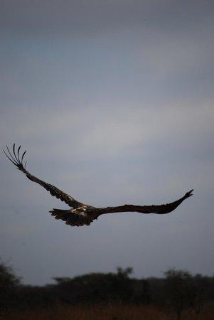 Campi ya Kanzi: Wildlife