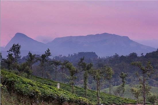 Sunset over the Grass Hills of Valparai