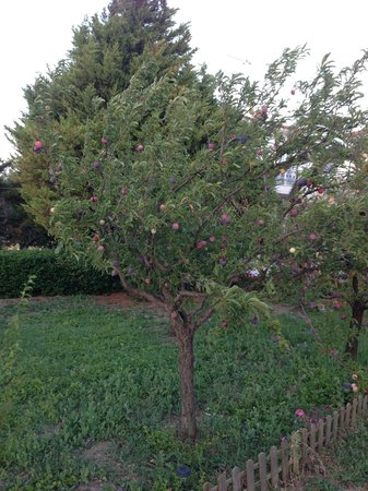 Dryoussa Apartments: Plum tree