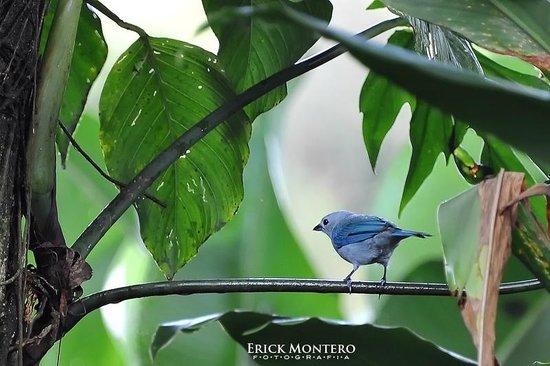 Ara Ambigua Lodge: Por todas partes se observan bellas aves.
