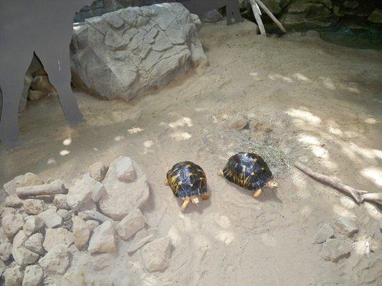 Minnesota Zoo: Tortoises