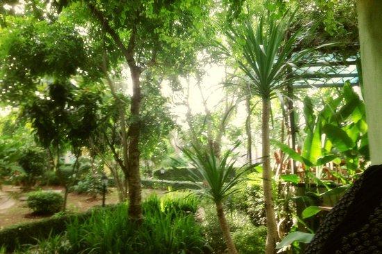 Moosi Yard Hometel Khaoyai: Sunny day!