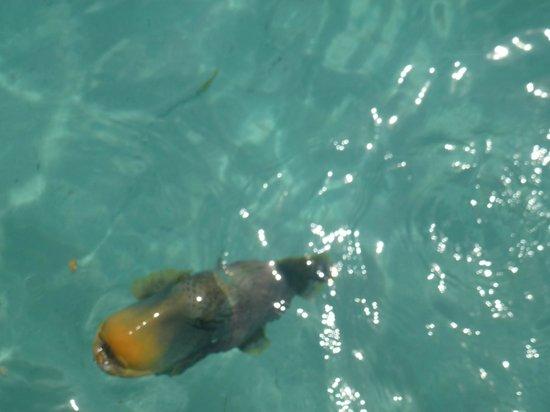 Coco Palm Dhuni Kolhu: Fish!