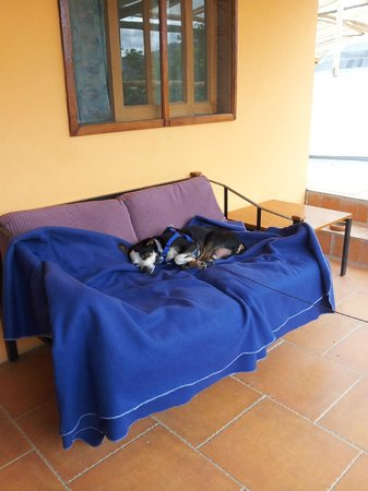 Madre Tierra Resort & Spa: Sleeping Pooch