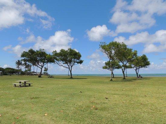 Kualoa Regional Park: Lots of trees and shade