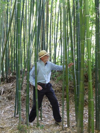 Jardin Botanique: in the bamboo jungle!