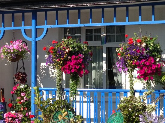 The Beech Tree Guest House: blooming lovely