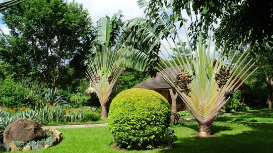 Arumeru River Lodge : Grounds