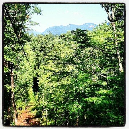 Canopy Ridge Farm: gorgeous views