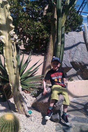 Inverness Botanic Gardens: Cactus house