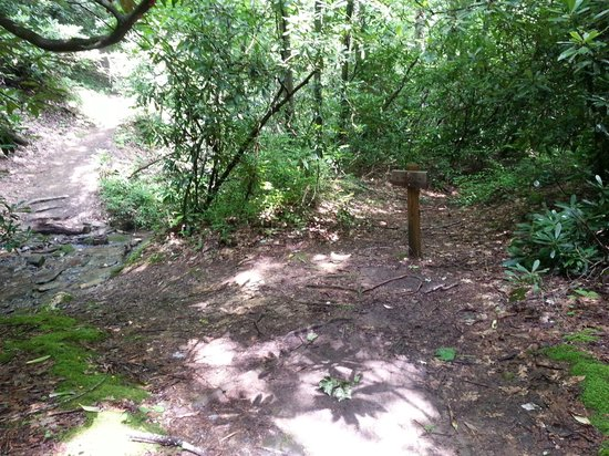 Baskins Creek Falls: Intersection where first sign is as you go left uphill toward falls