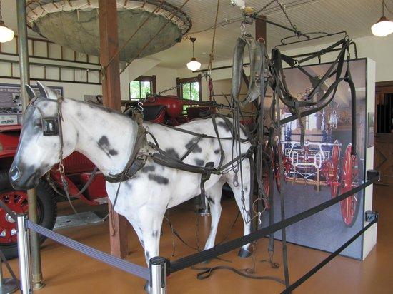Lakeshore Museum Center: Horse Halter & Reins