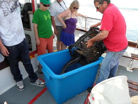Mermaid Pleasure Trips: Pulling up the crab pots