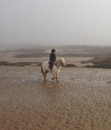 Seacliff Stables: Misty morning on the beach