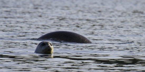 St. Andrews Ocean Adventures: Seals looking