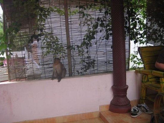 Mickey's Homestay : Cheeky mokeys stealing our jack fruit