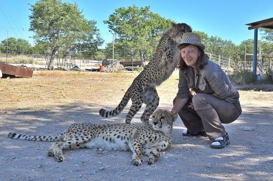 Lodge at Otjitotongwe Cheetah Park: Frechdachs - Hutklau!