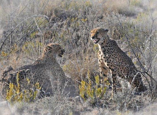 Lodge at Otjitotongwe Cheetah Park: kleine Reibereien