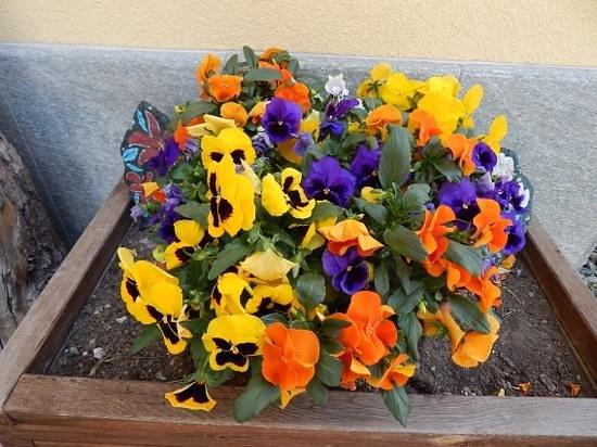 Chalet Flower: fiori ingresso