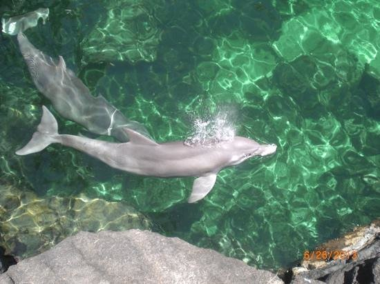 beautiful Dolphins at Dolphin Quest