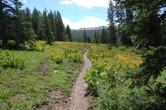 Weminuche Wilderness Area: georgous!