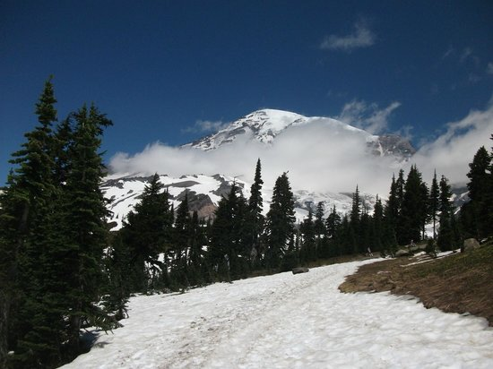 Trip Advisor Best Seattle Mt Rainier Tours